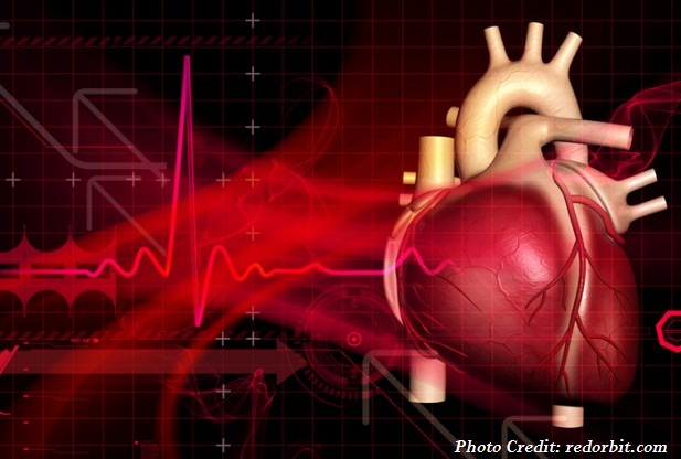 Cardiac Muscles Cannot Regenerate in Case of Humans why