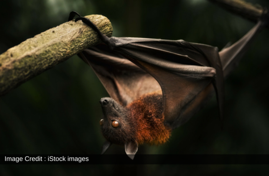 Chemically Induced Pollution Affects Bat Population Decline