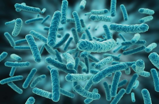 Lactobacilli protects our Intestinal cell New Finding