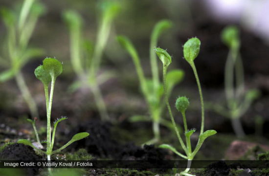 Prions May Be Involved In Flowering Time Of Plant: New Study