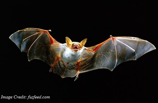 Researcher Identify Mutations In Transmission Of Mers From Bat To Humans