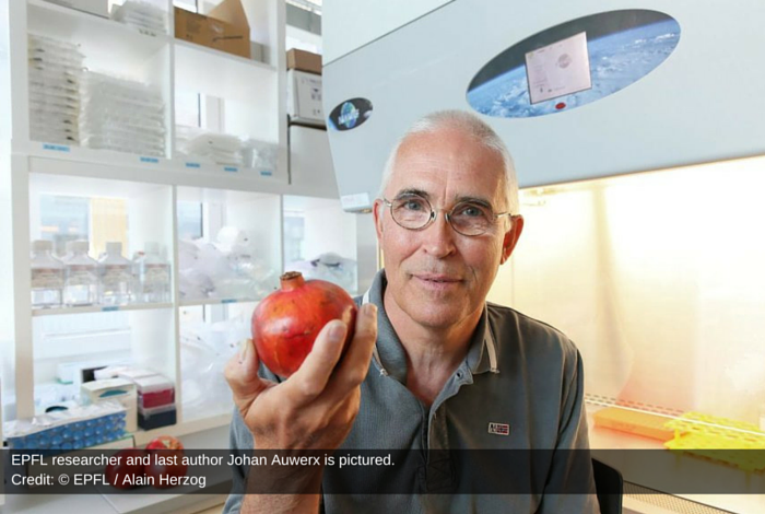Researcher Unlock Anti Aging Mystery Of Pomegranate