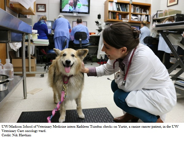 Possible Biological Trigger for Canine Bone Cancer Found
