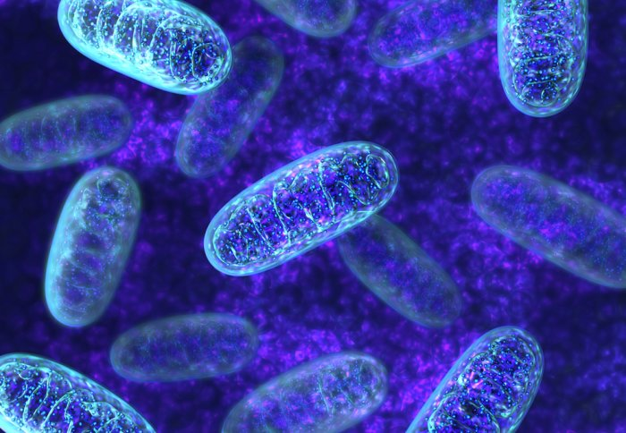 Biocompatible photooxygenation catalyst could be conceivably used to treat amyloid infections