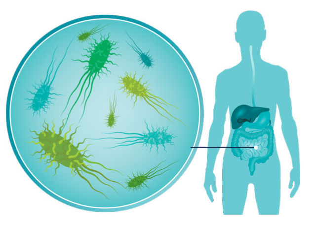 Recently recognized supplement helps the gut review earlier diseases and execute attacking bacteria