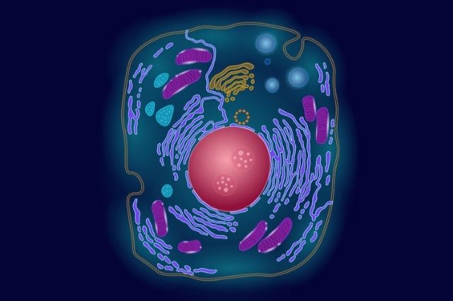 Scientists concentrate what the methylation of proteins means for various mitochondrial measures