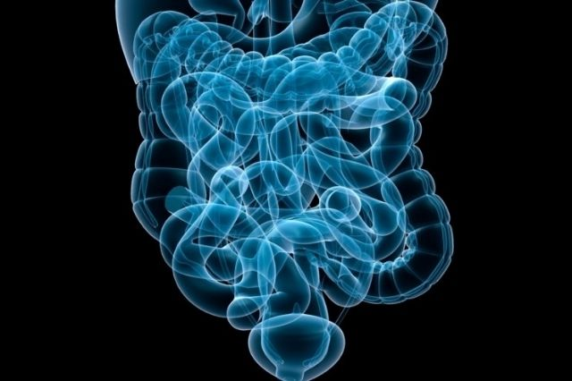 Hereditary components of human gut microbiota are key to wellbeing