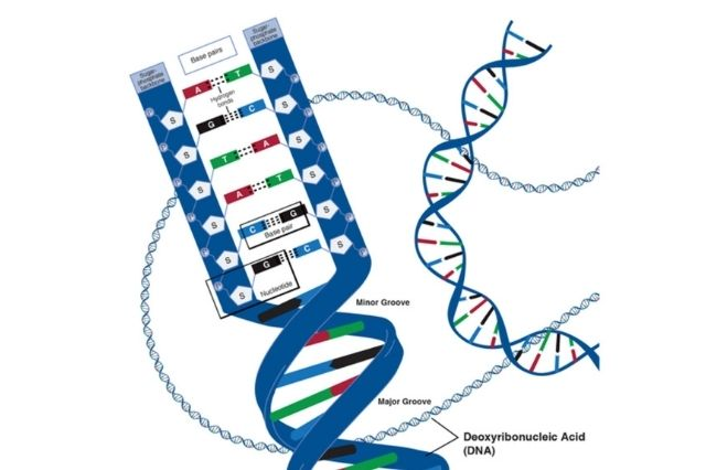 A little sensor can be utilized for fast recognition of RNA and DNA