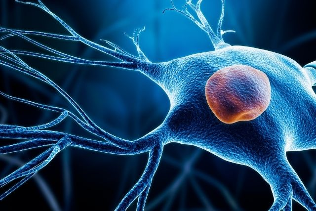 Cryopreservation Media helps in Development of a Cell Therapy for Parkinson's Disease