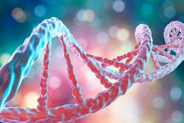 DNA recuperated from illicit drug capsules could be utilized to track criminal syndicates