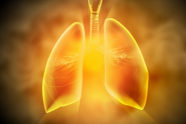 Industrial chemical perfluorobutanoic acid less inclined to aggregate in human lungs and kidneys